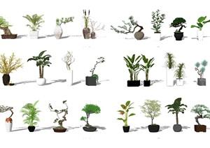 现代盆栽植物 景观小品SU(草图大师)模型2