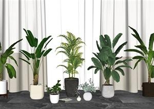 现代盆栽 绿植 植物窗帘组合SU(草图大师)模型