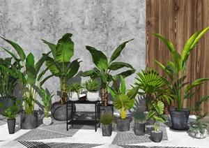 现代绿植盆栽 植物SU(草图大师)模型1