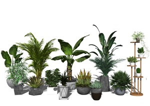 现代绿植盆栽 植物SU(草图大师)模型2