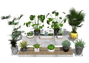 现代绿植盆栽 植物SU(草图大师)模型3