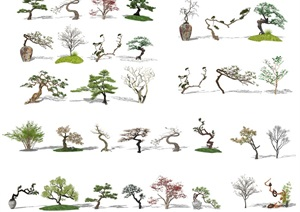新中式景观树 景观小品 树 植物SU(草图大师)模型2