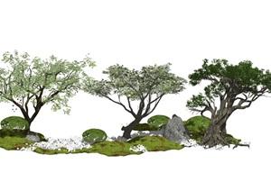 现代景观树榕树乔木植物SU(草图大师)模型