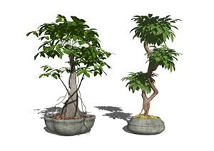 现代盆栽植物组合SU(草图大师)模型