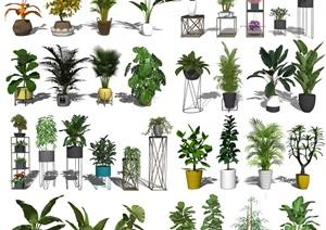 现代盆栽 绿植 植物 花架SU(草图大师)模型2
