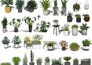 现代盆栽 绿植 植物 花瓶 吊篮SU(草图大师)模型