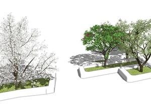 现代树池景观树鸡蛋花乔木SU(草图大师)模型