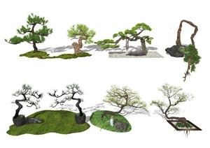 新中式风格景观树 景观小品 景观树 植物SU(草图大师)模型