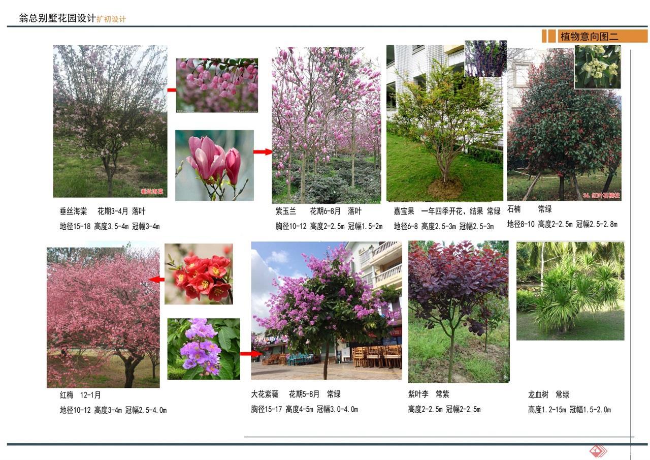 15 植物意向图 (2)