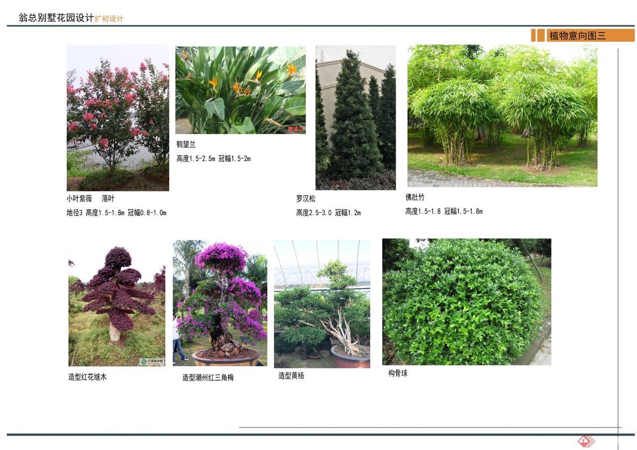 16 植物意向图 (3)