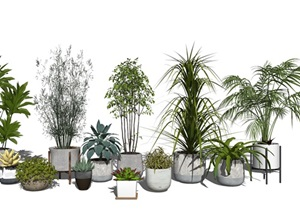 现代盆栽 植物 绿植SU(草图大师)模型4